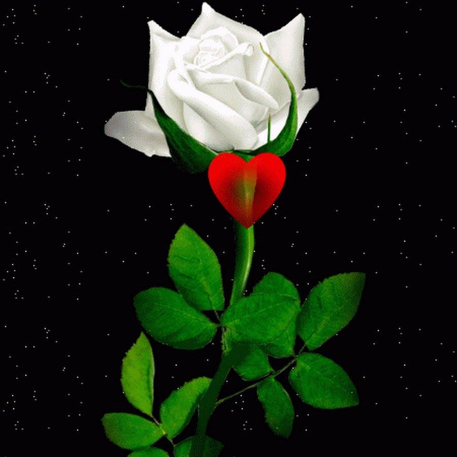 Картинки анимация белых роз, марта картинки
