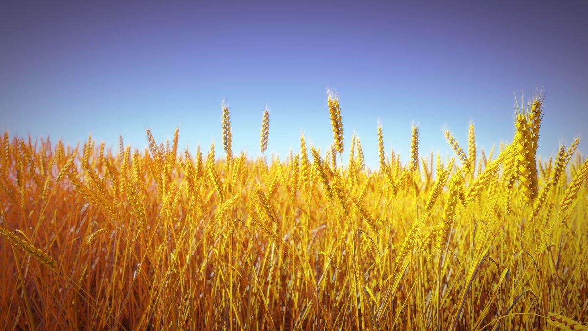Картинки поле пшеница