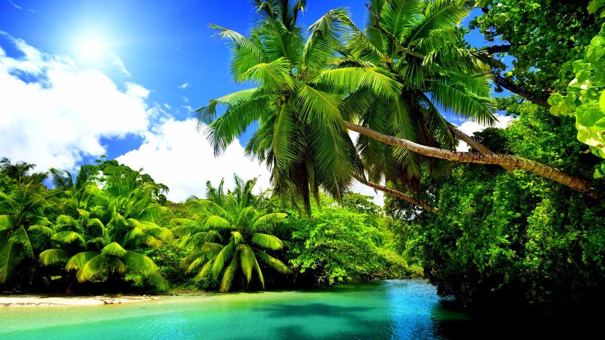 Берег моря с пальмами картинки