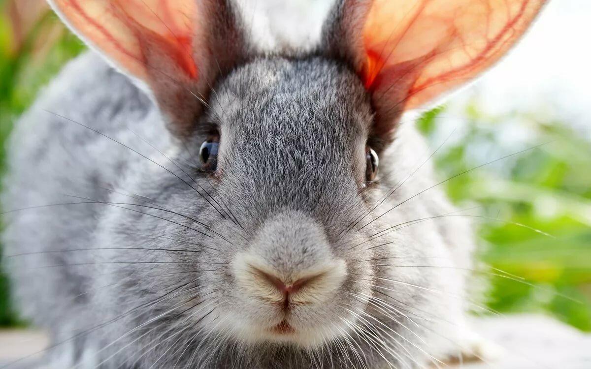 Кролик картинки прикольное, картинки надписями отпуск