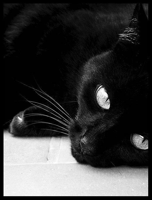 возвращения картинки когда скучаешь черно-белые тени