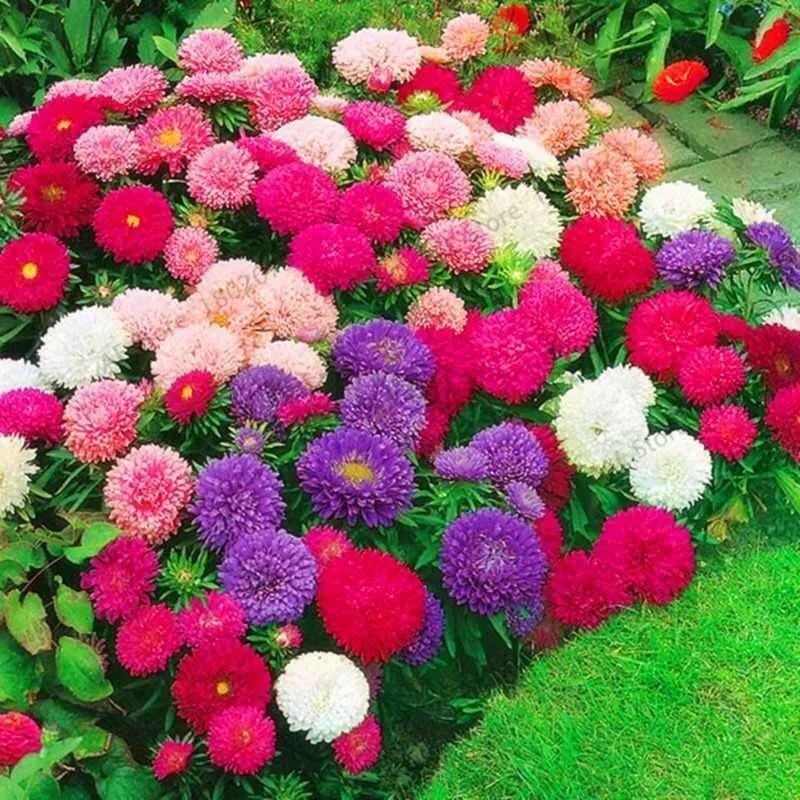 название огородных цветов с картинками рыбу