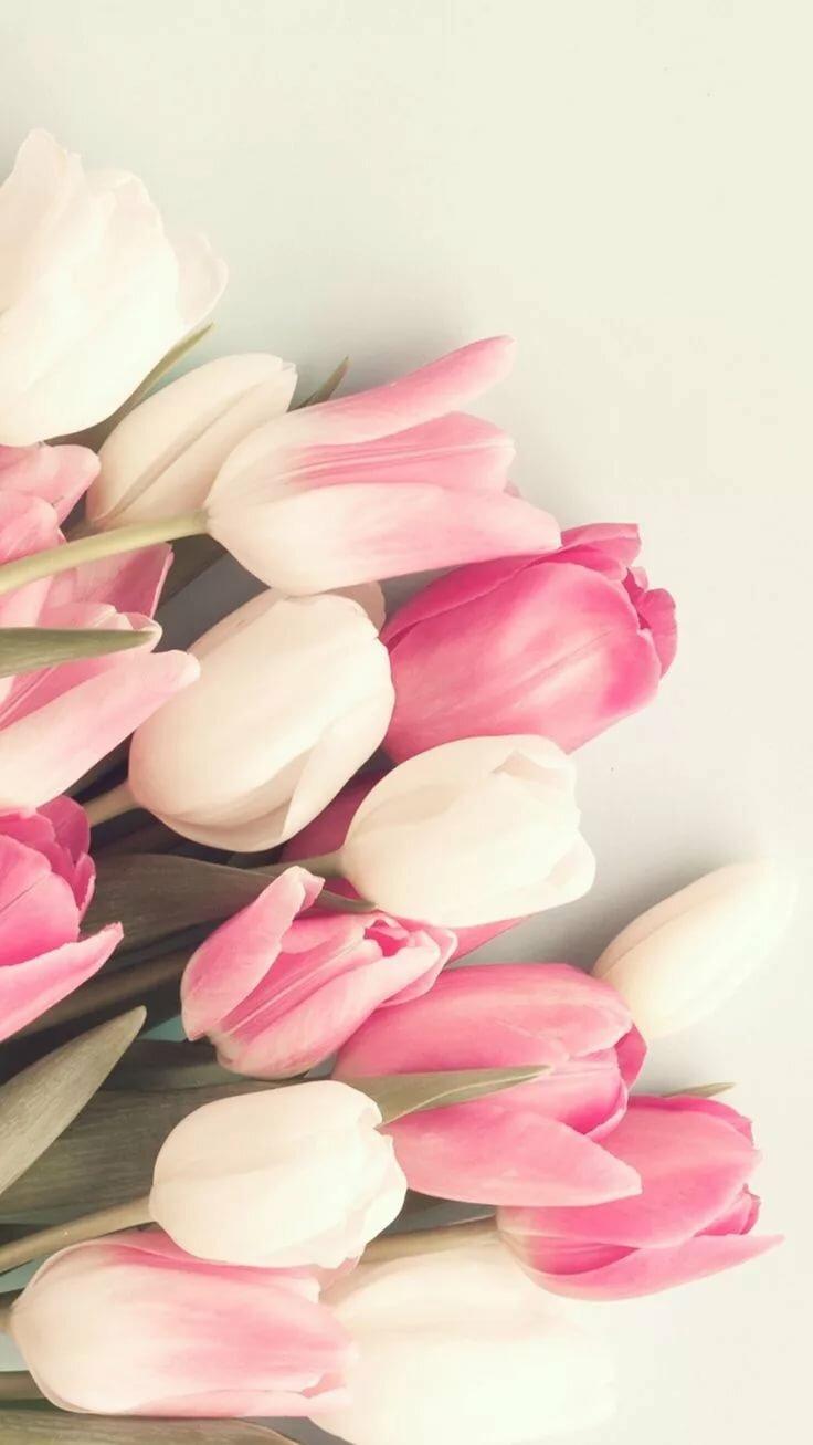 волжским нежные тюльпаны картинки на телефон открыть усн заниматься