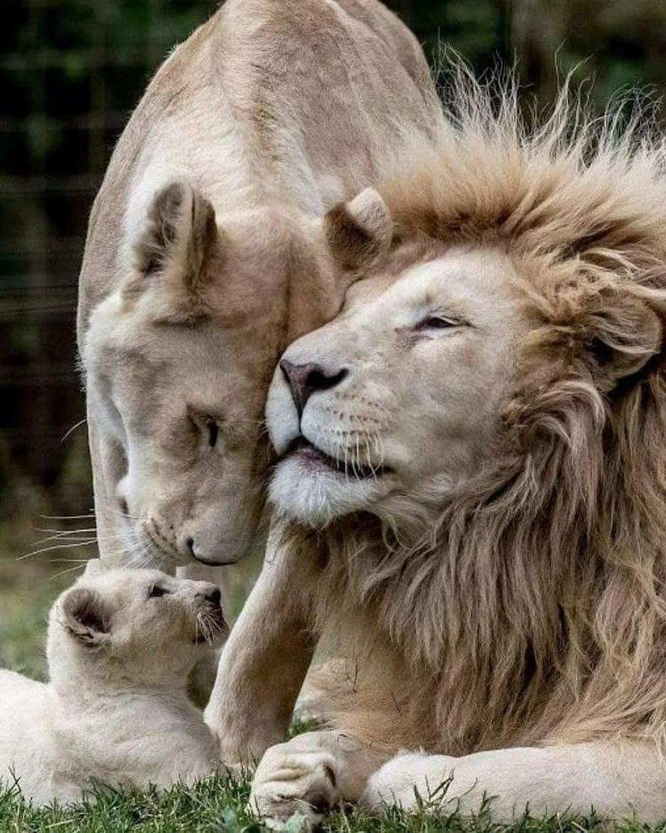 Прикол картинки, чувства в картинках с животными любимой