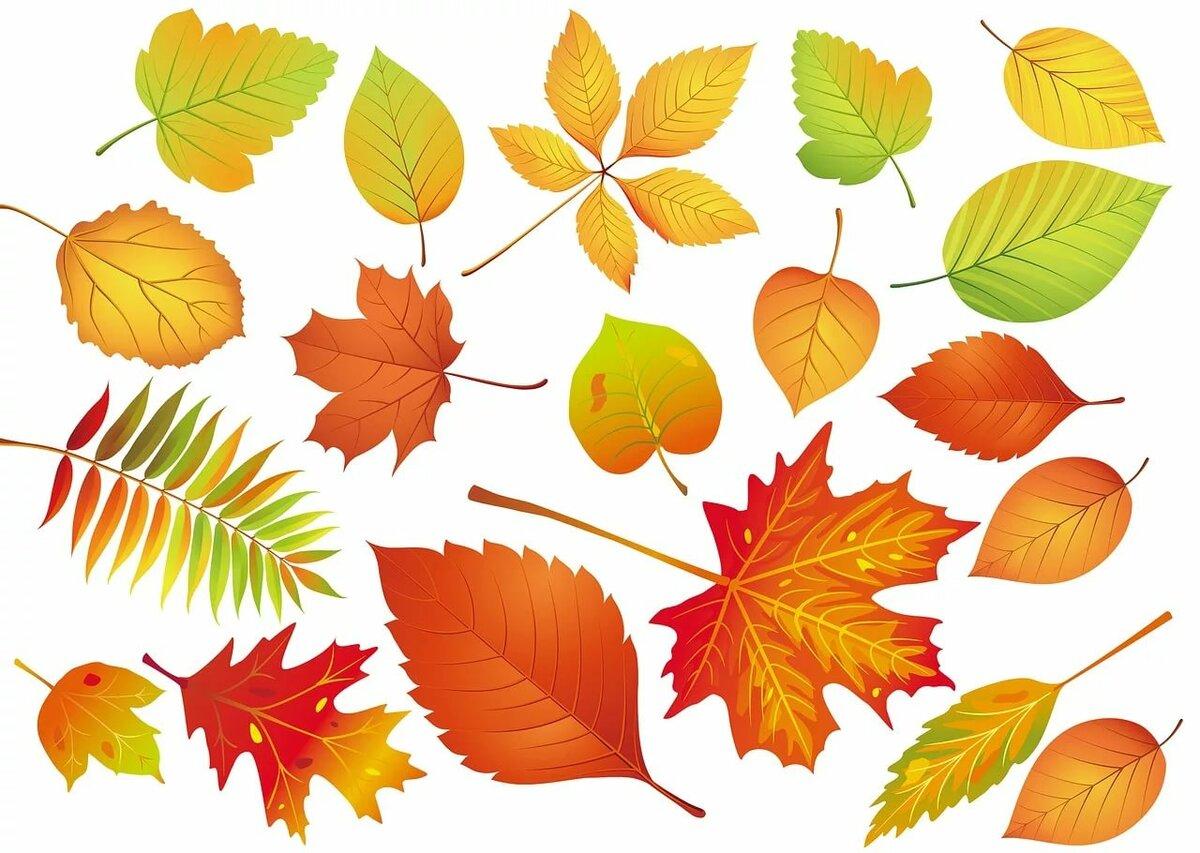 предков картинки осенних листиков деревьев книги продолжают покупать