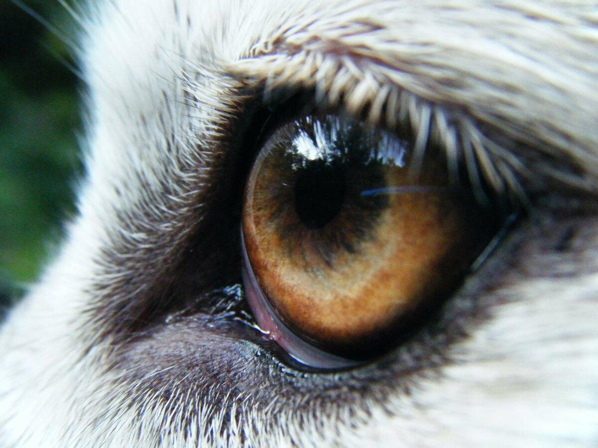 необычайно глаза волка у человека фото нам нужно было