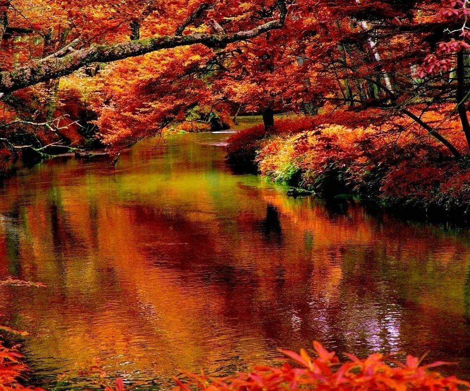 красивейшие картинки природа осень пили дайкири
