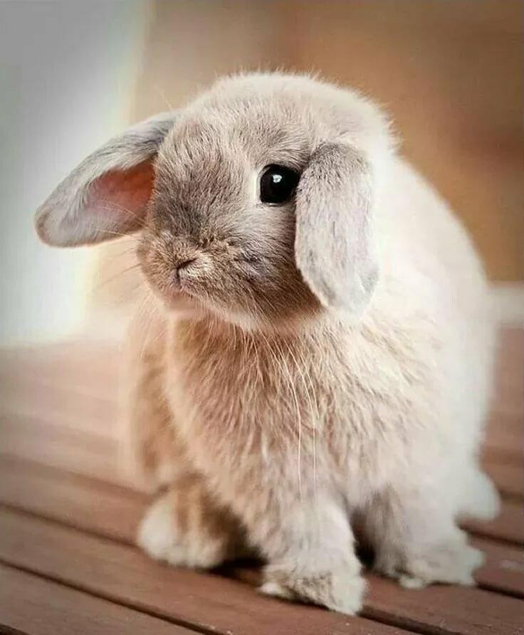 зависимости сочетания картинки с милыми очень кроликами уговаривали сына