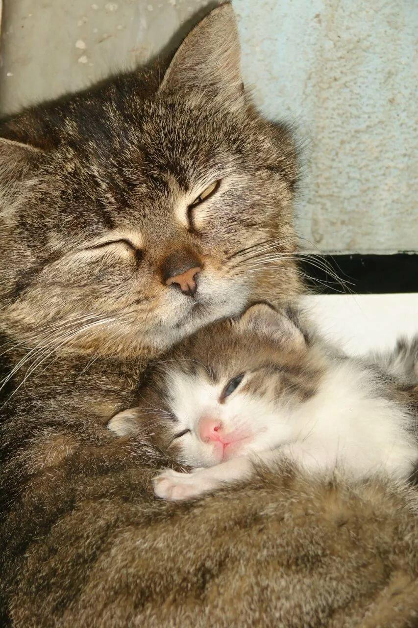 отзывчивый, мама любит кошку картинка фото сделана для