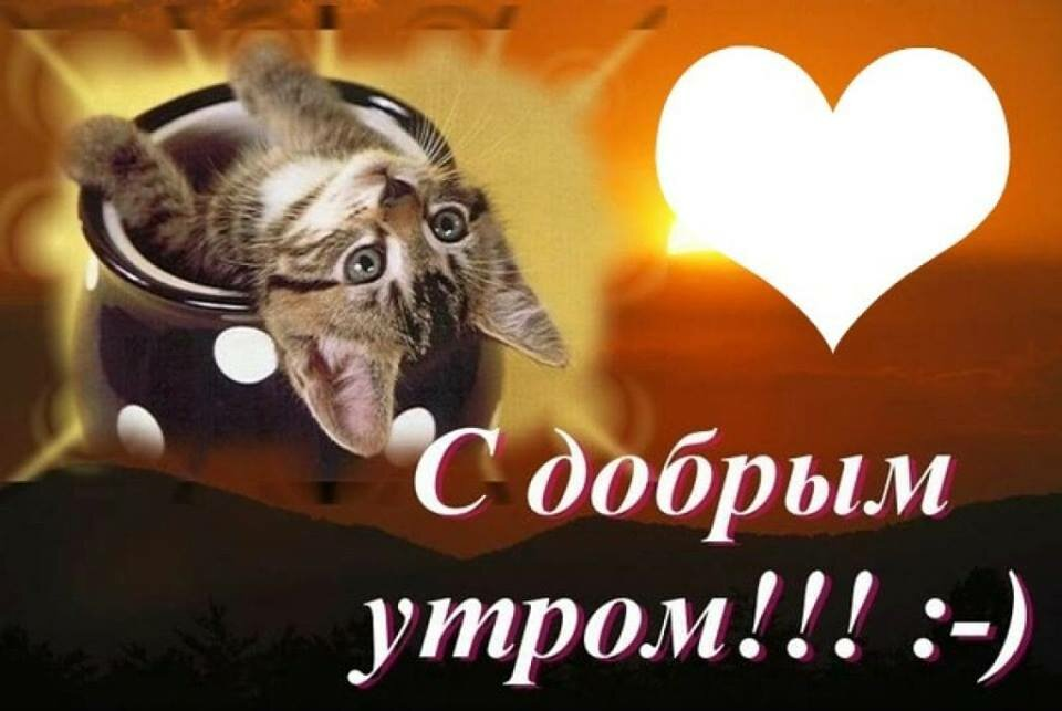Картинки с добрым утром мой котенок ваня