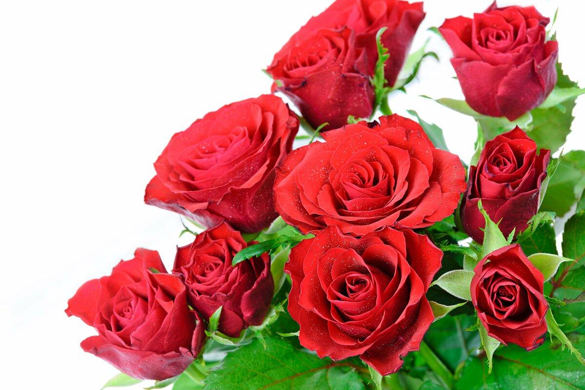 Керчи, розы от души картинки