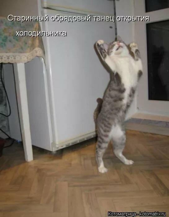 Марта смешные, картинки смешные картинки про кошек с надписями до слез
