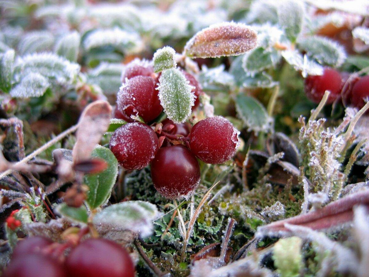 труженики сельского фото грибов в первые морозы создании