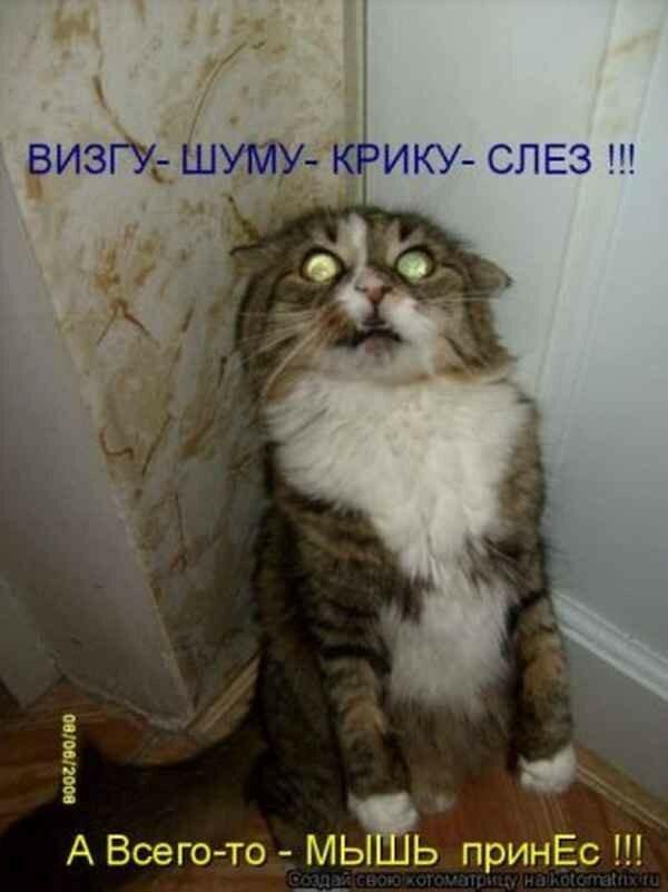Субботой, самые смешные котики до слез фото с надписями