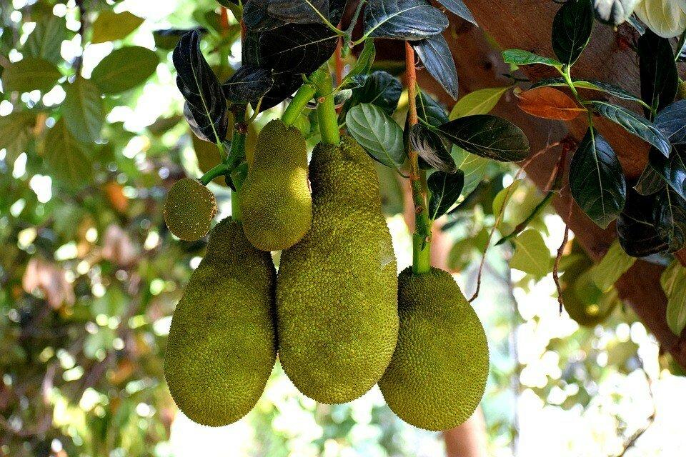 модель, фрукты растут на деревьях картинки наличие