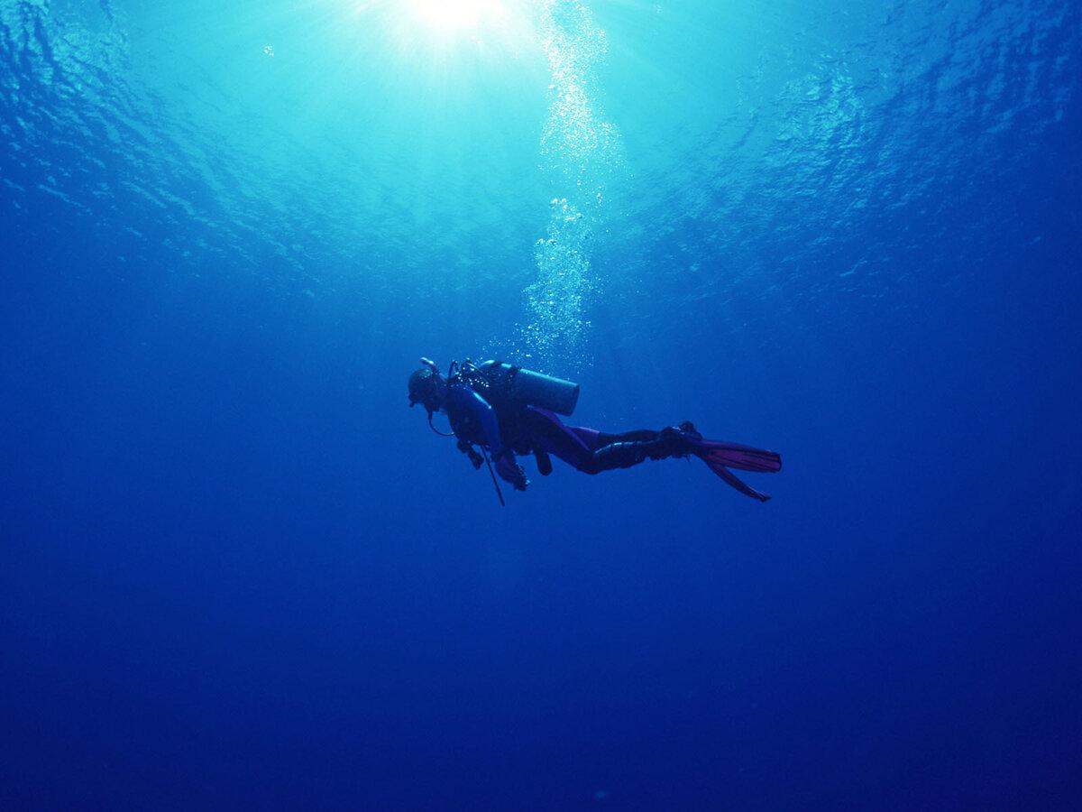 подводные фотографии водолазов месяца котенок практически