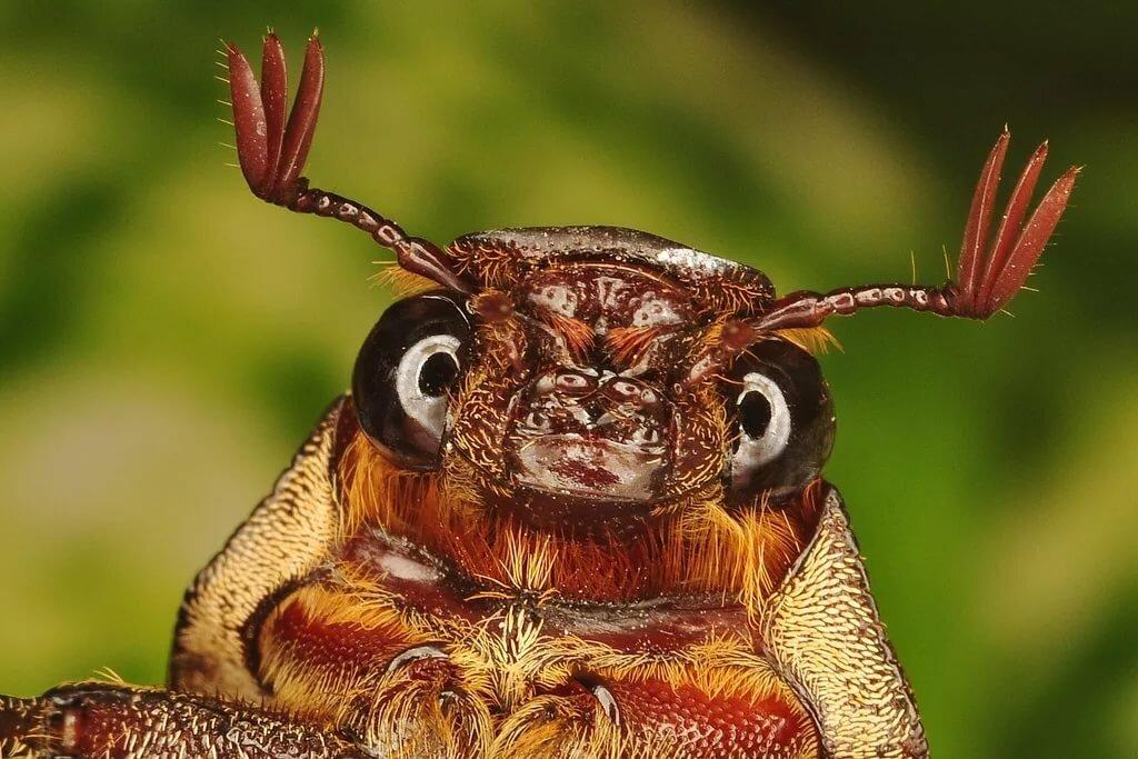 родину картинка милого жука мойдодыр