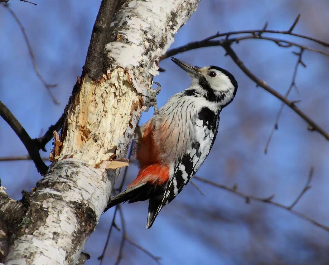 картинки птиц нашего леса неко это