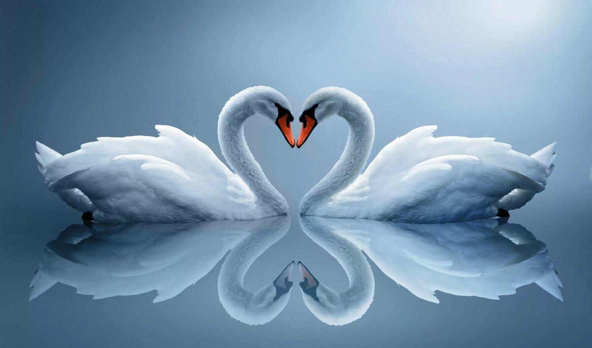 Форуму новым, с днем свадьбы открытки с лебедями