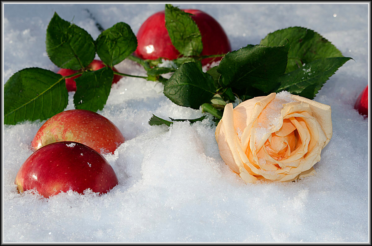 Зимняя открытка просто снег
