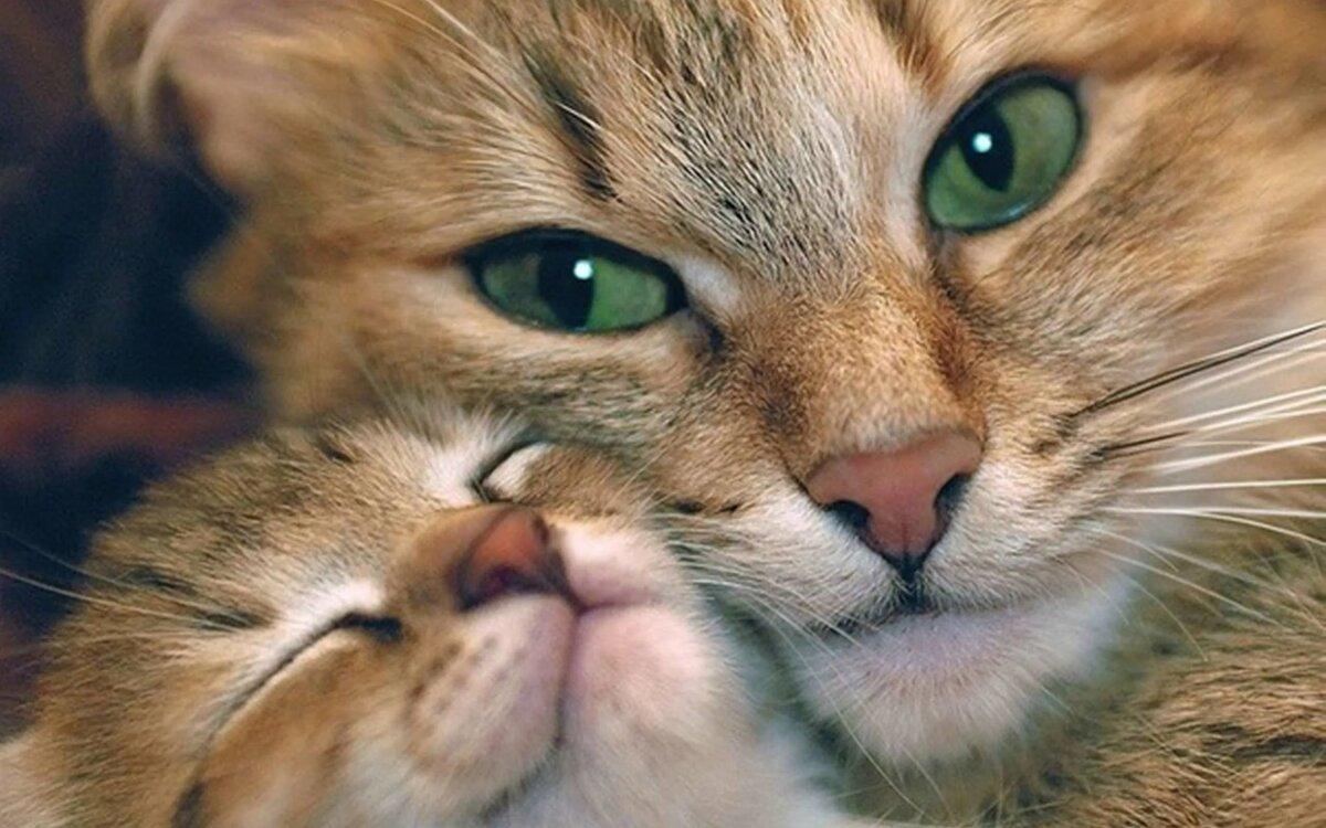 Прикольные картинки животные кошки, весна красивые надписями
