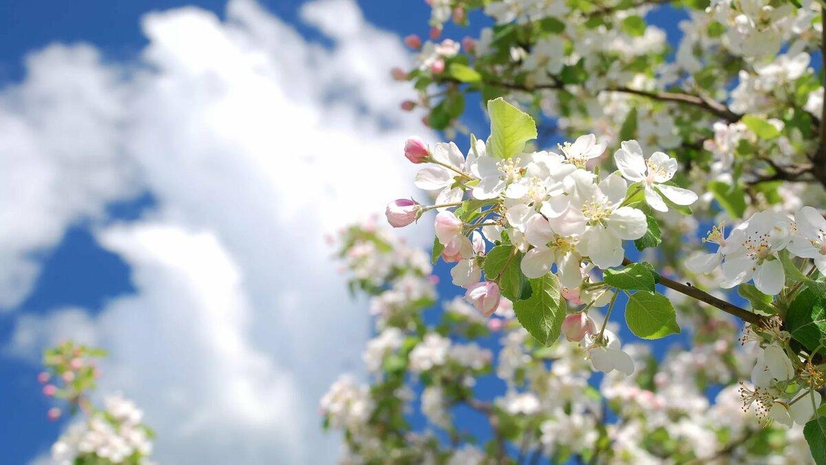 Картинки весна май, днем рождения никита