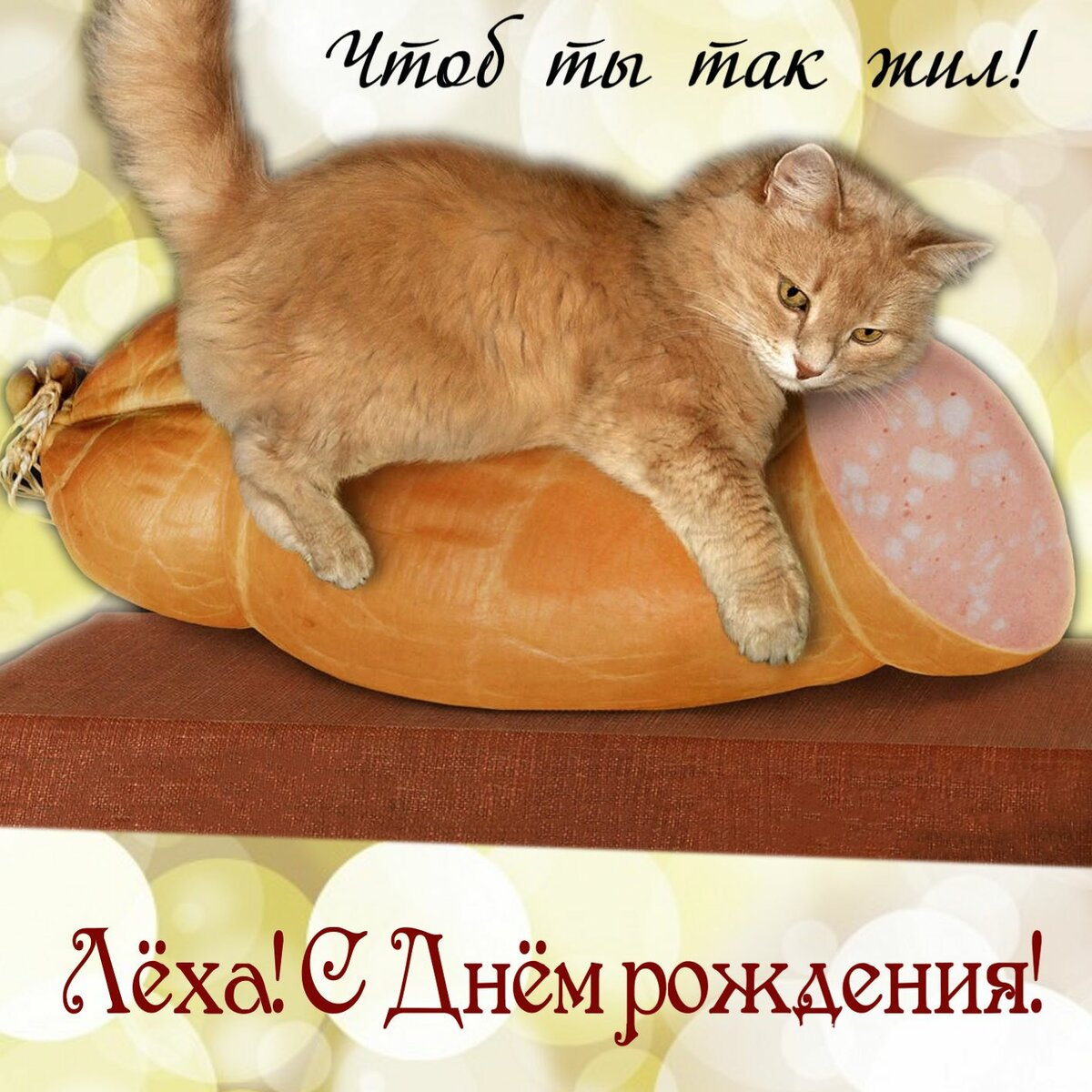 Поздравление с днем рождения открытка с котами, бабочкой