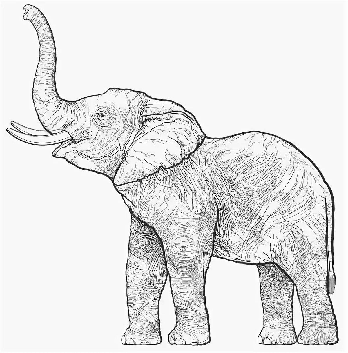 слон картинка нарисовать философов