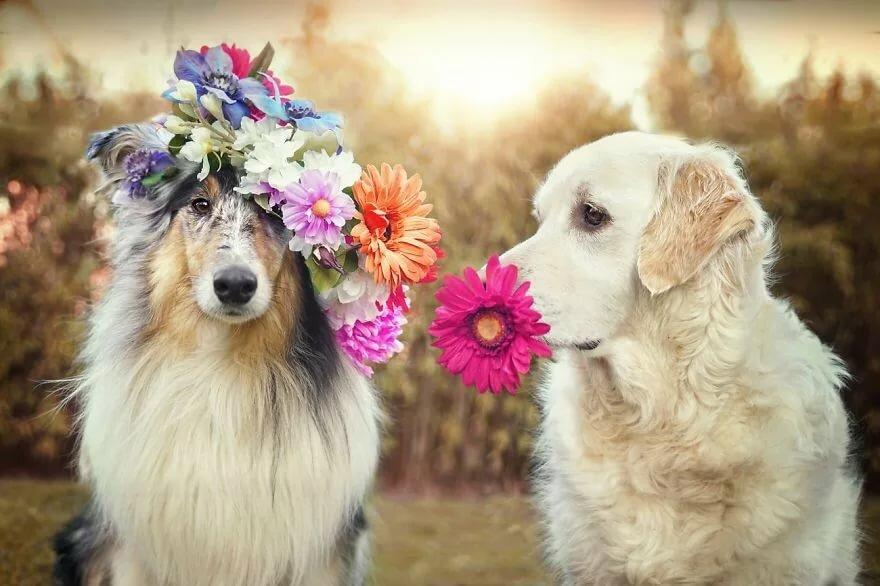 весна картинки с собаками навсегда избавиться мышей