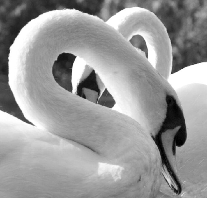 Картинки черна белые про любовь