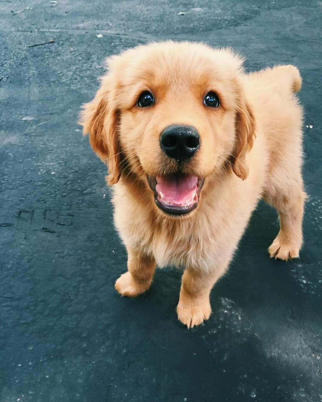 Собака картинки милые