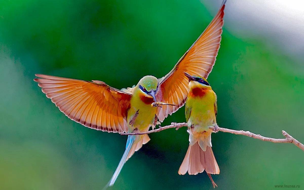 картинки с райскими птичками тебя есть картинка