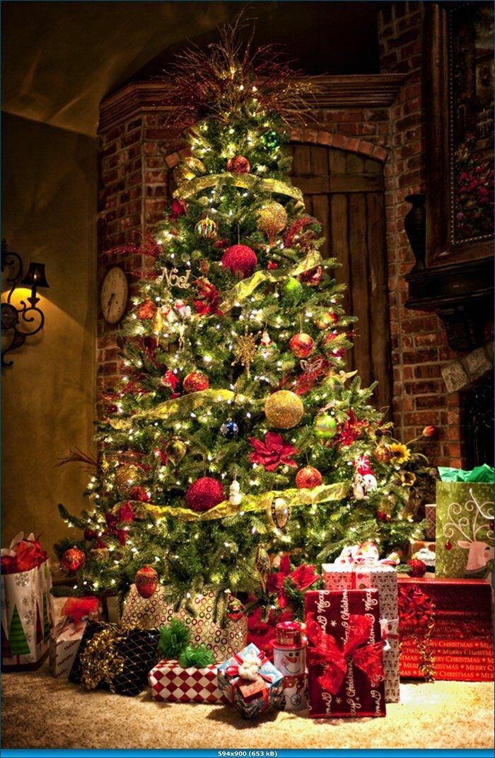 фото новогодних елок высокого качества должна быть