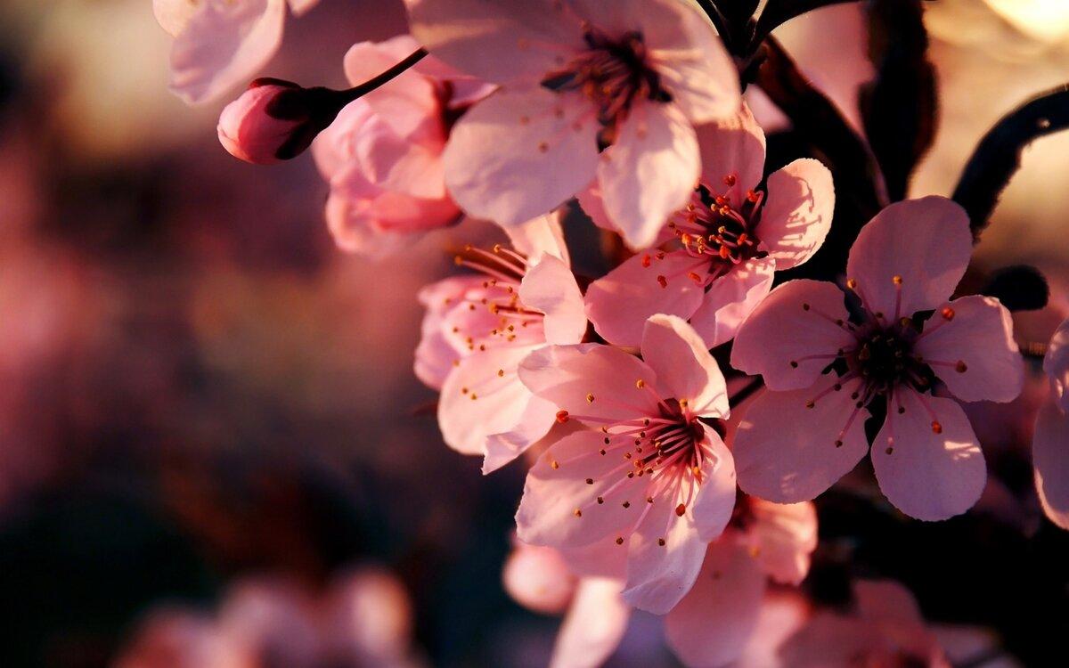 Открытка дерево с цветами