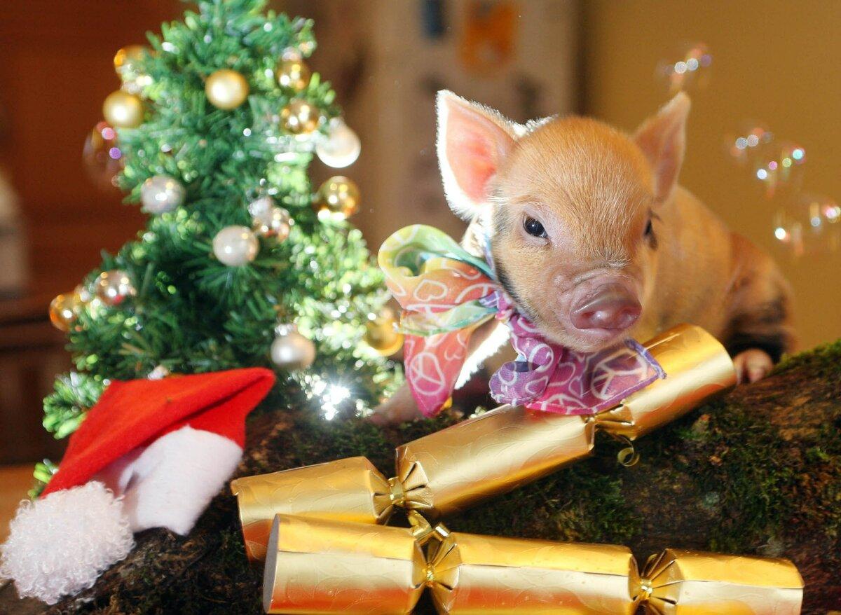 Новогодние картинки год собаки и свиньи, старые