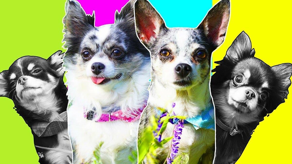 модели картинки собак эни мэджик продаже