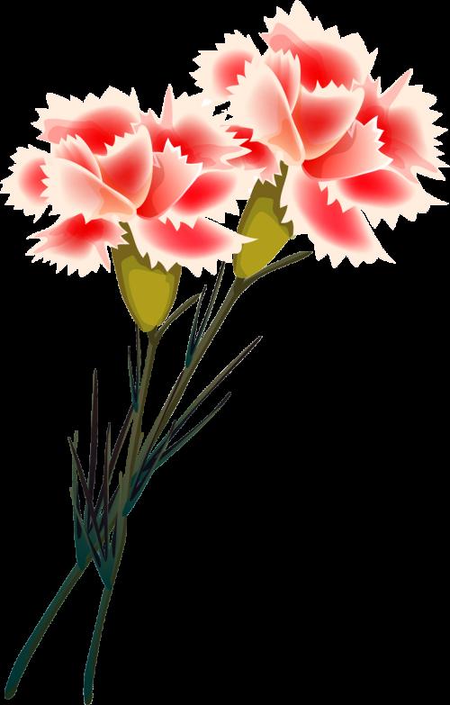 Фото на прозрачной основе цветы маки один облегченный
