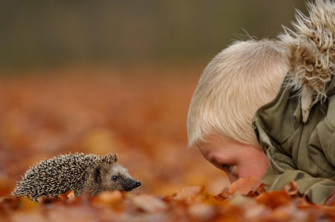 Осенняя картинка с ежиком