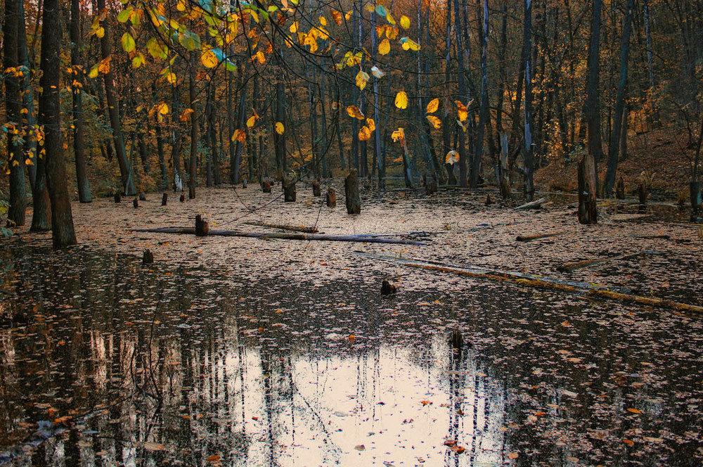 Лужи отражают листья деревьев подрагивают от ударов ÐºÑ€ÑƒÐ¿Ð½Ñ‹Ñ ÐºÐ°Ð¿ÐµÐ»ÑŒ дождя