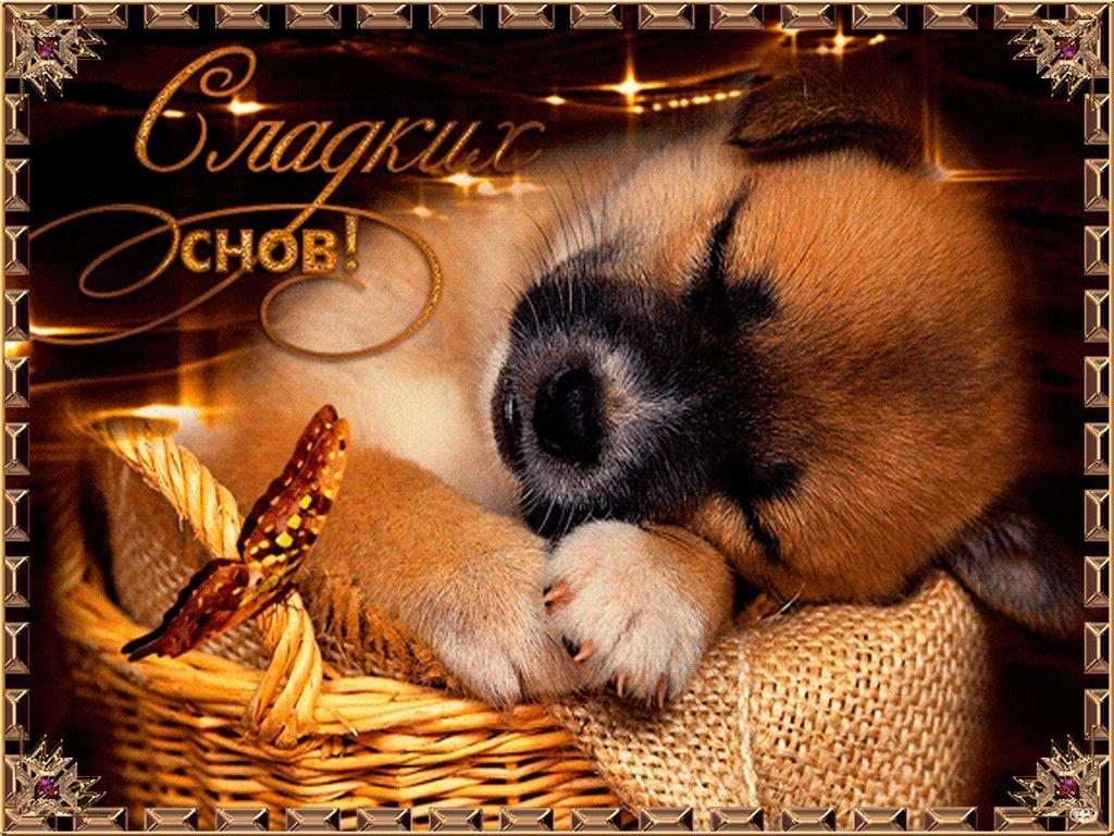 Картинка спокойной ночи сладких снов анимация, открытки картинки для
