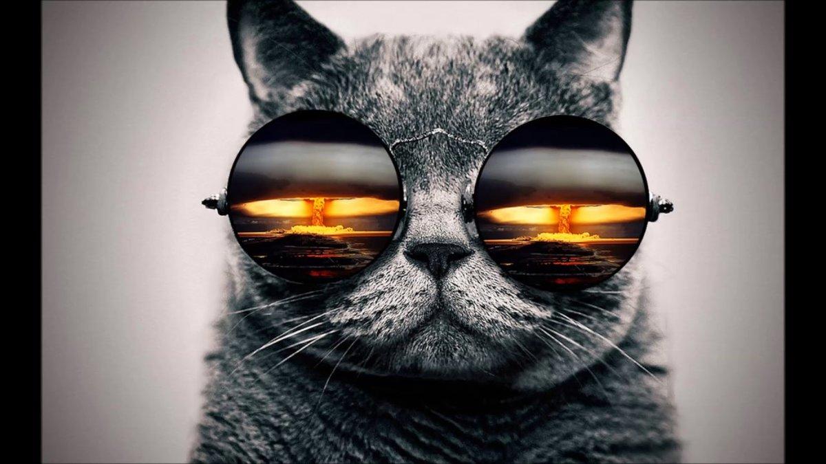 Крутые кошачьи картинки, прости меня пожалуйста