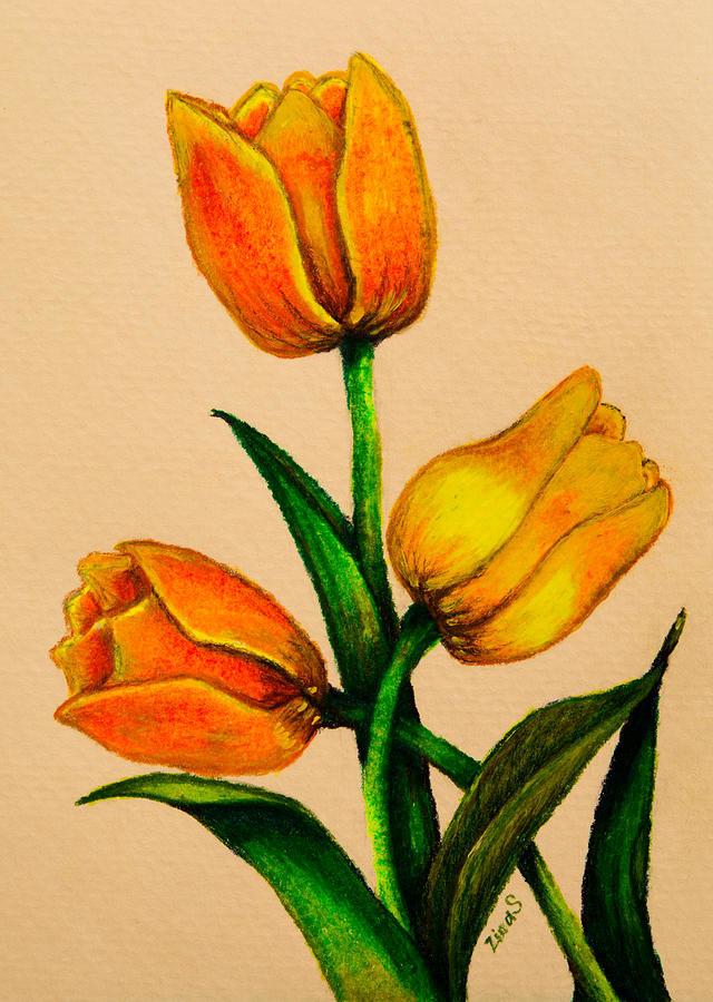 Тюльпаны картинки карандашом