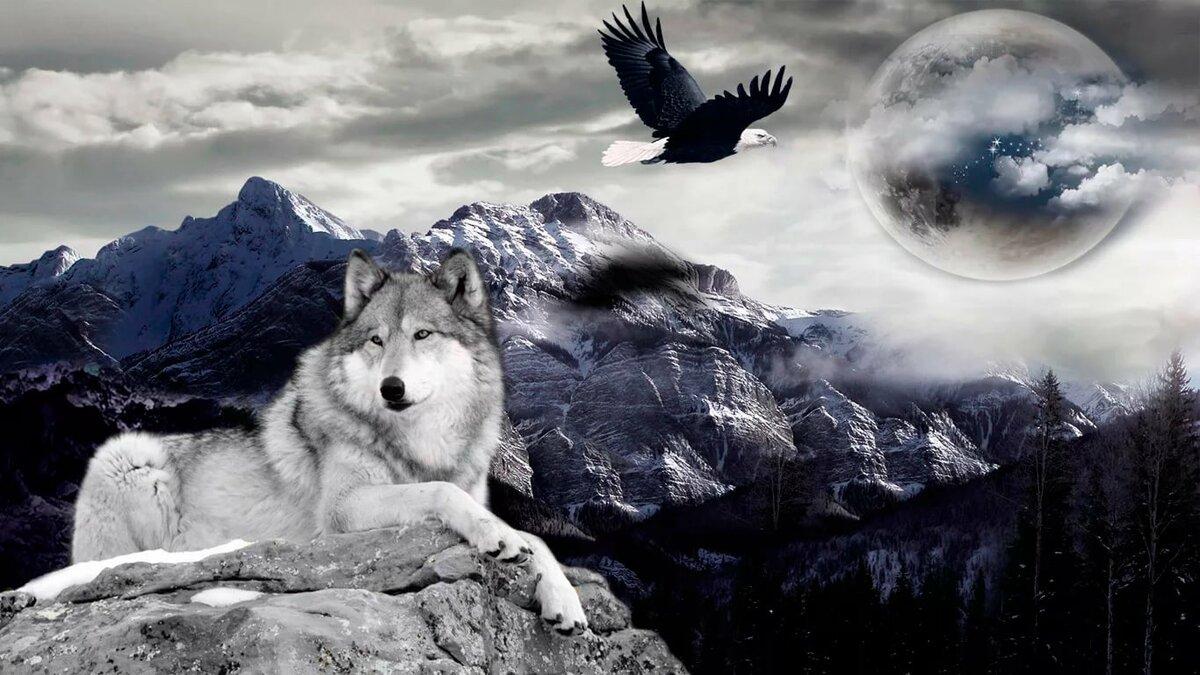 картинки про волков на телефон придания