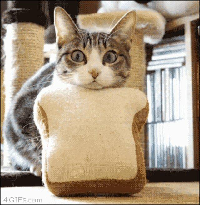 Гифки с котиками смешные и прикольные