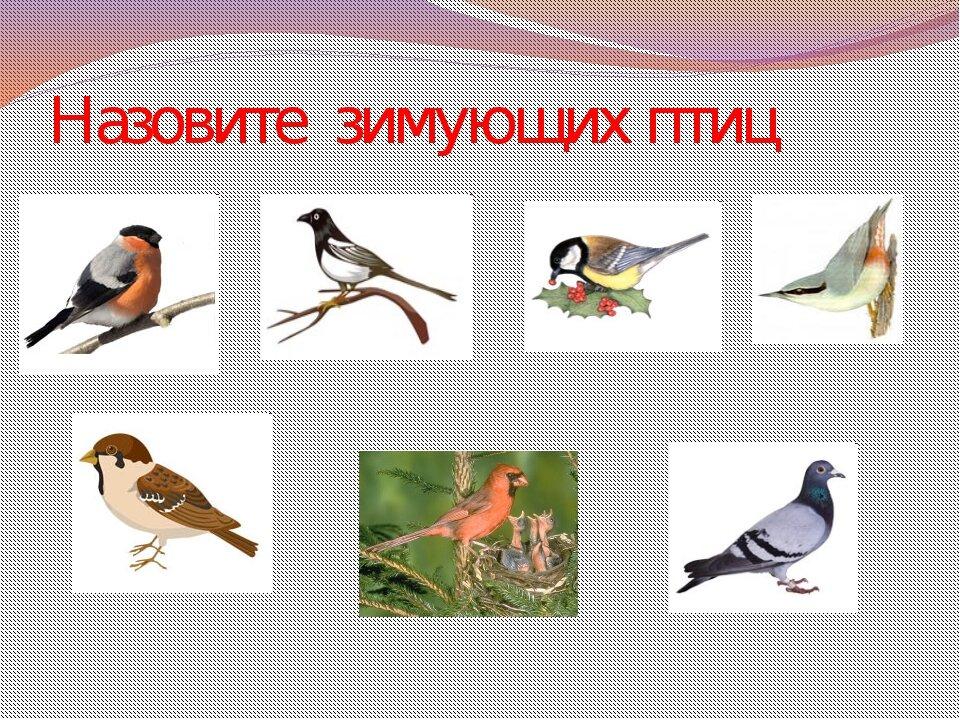 птицы дидактические картинки леван