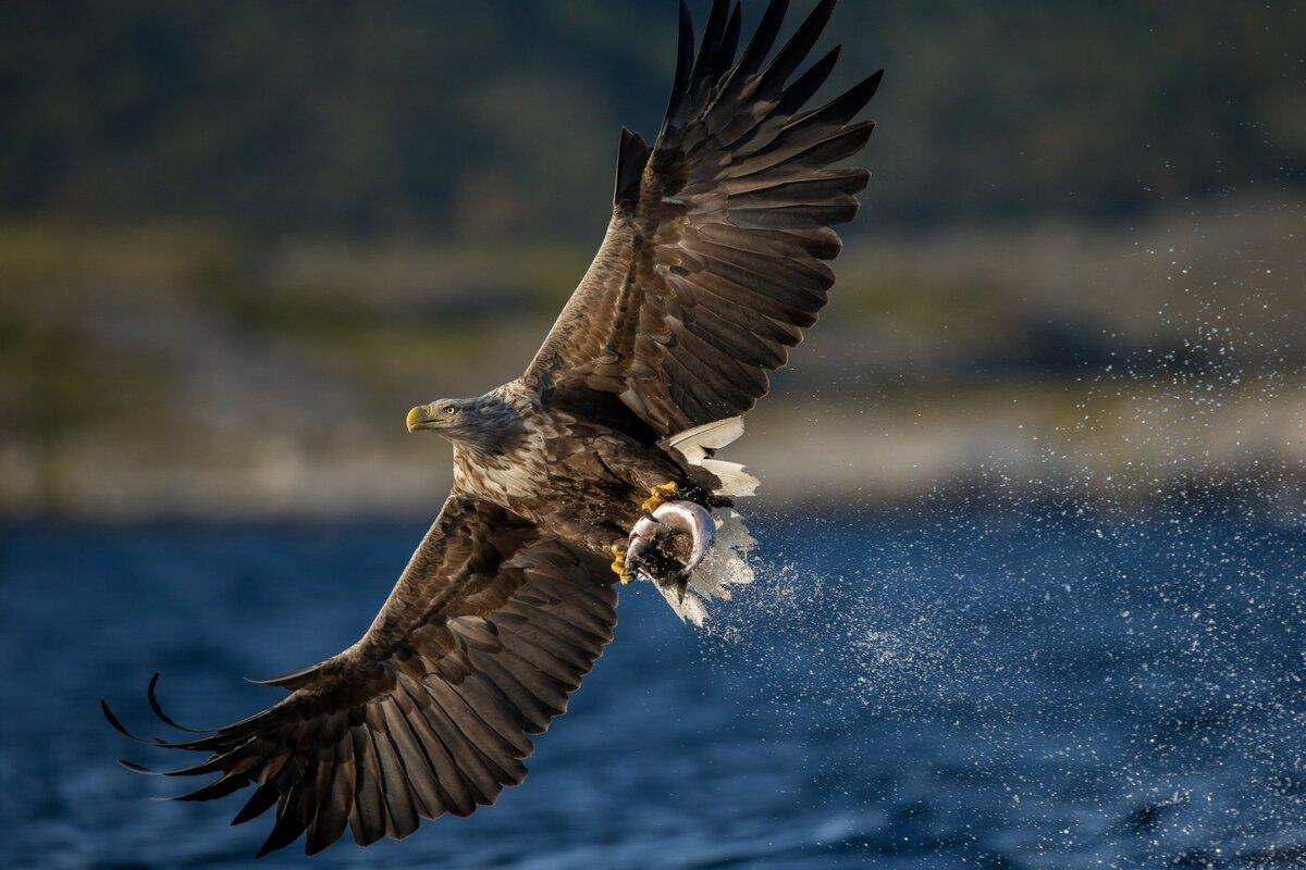 качественное фото сокол и орел