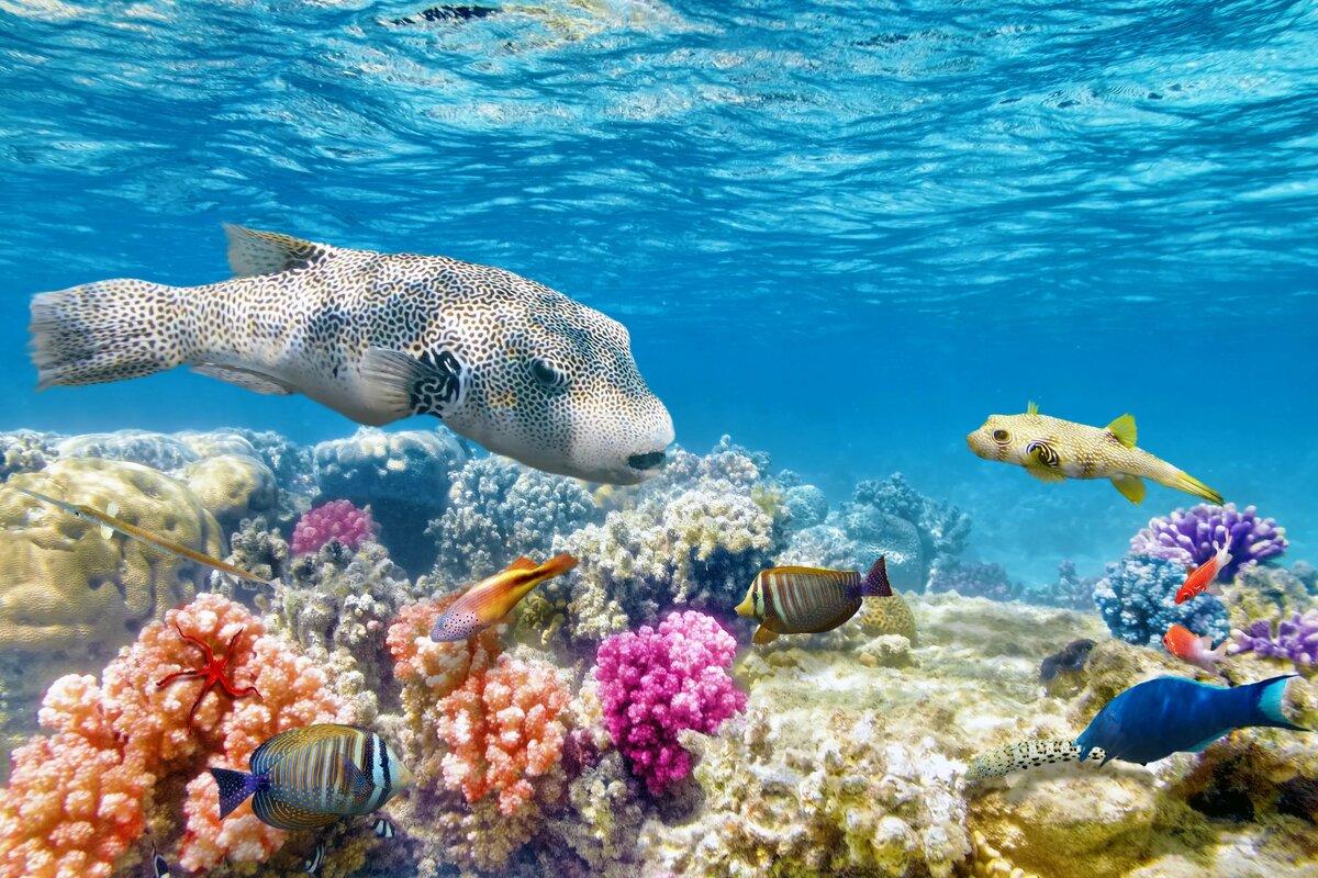 Открытки, картинки с морскими животными красивые