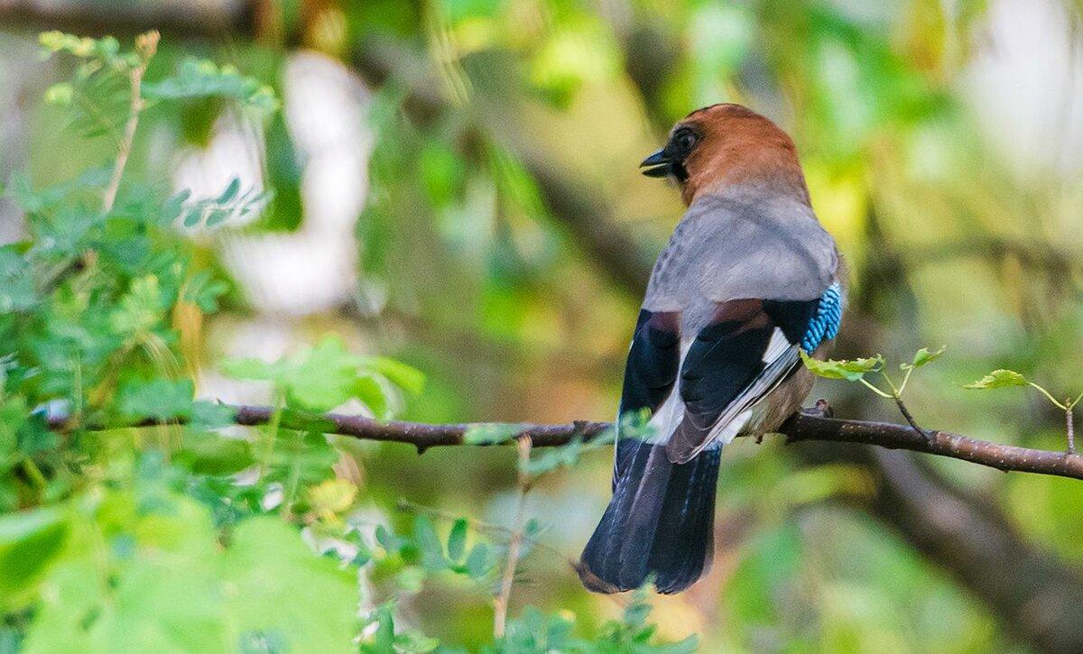 картинки птиц нашего леса искусстве