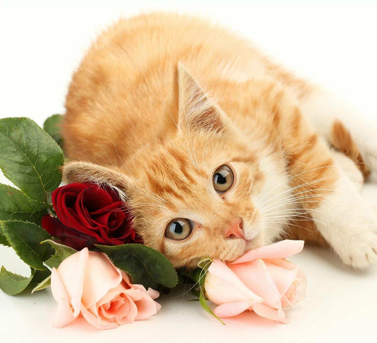 Открытки с днем рождения с кошками и цветами