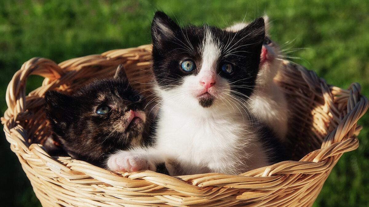 складик для красивые фото с домашними животными блок законов касался
